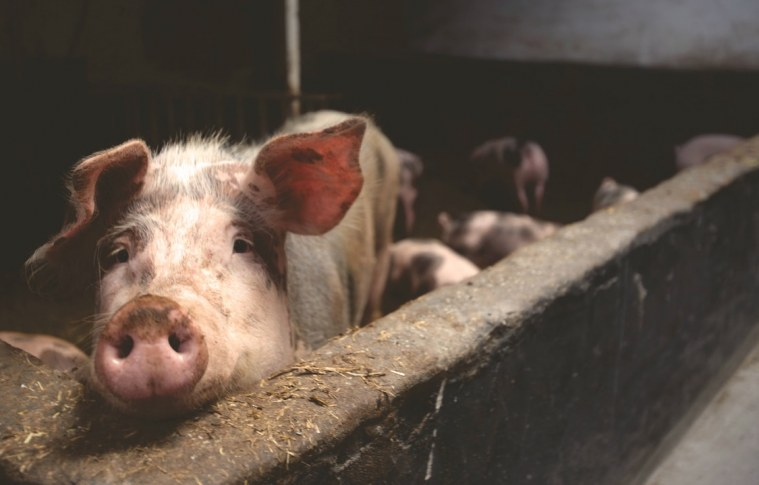 Animal Farming: Planet's Doom, Humanity's Shame