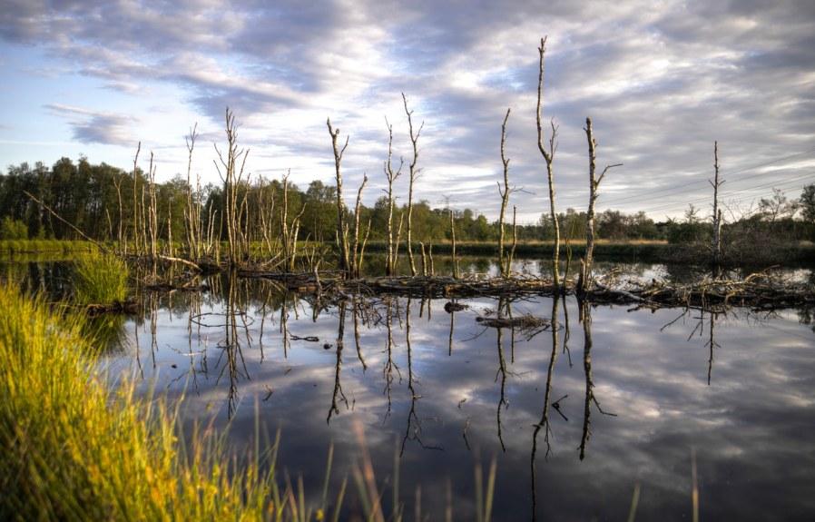 Preserving Wetlands for Sustainable Development!!